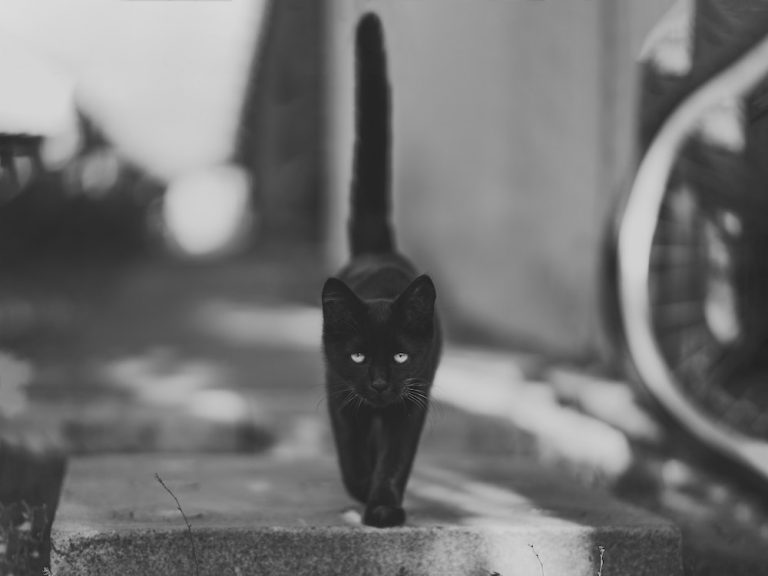 black-black-cat-blur-min